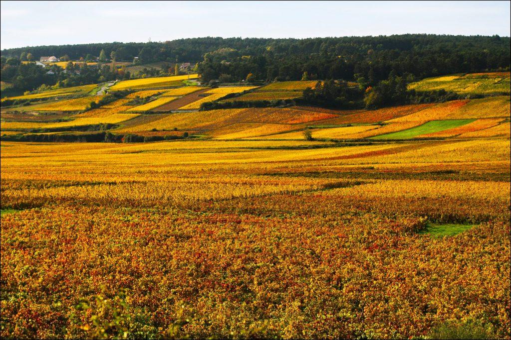 Wijngaard van Beaune